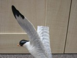 Beswick Seagull on Rock before restoration and repair